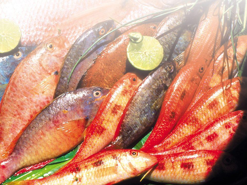 Pêche : sargasses, opportunité non démontrée