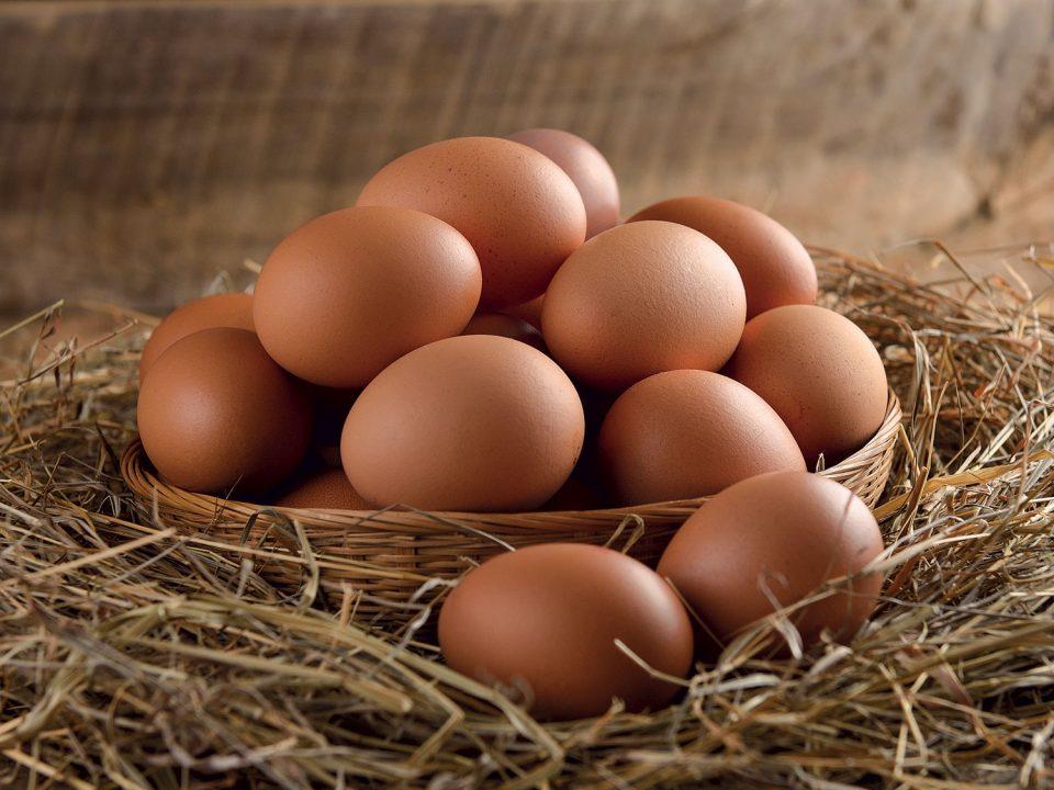 Prix de l'œuf à couver : y'a vraiment un problème !