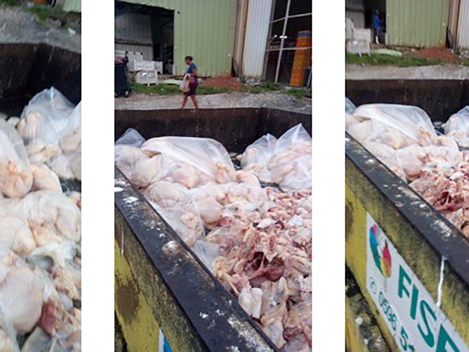 Poulets en Martinique : la destruction continue