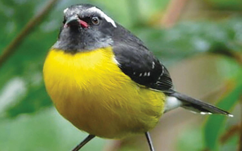 Biodiversité en Martinique : espèces en danger !
