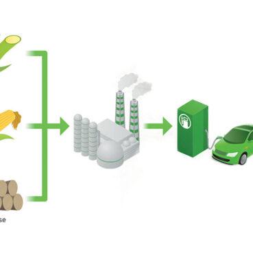 Canne à sucre outre-mer : un futur par la valorisation énergétique